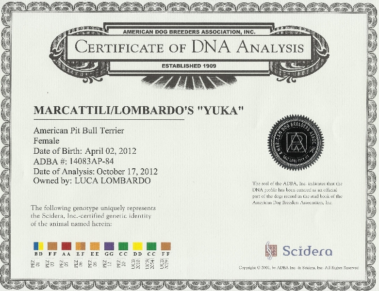 Marcattili's & Lombardo's Yuka Certificate Of DNA Analysis