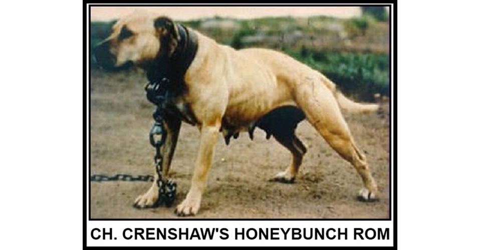 Central Coast Kennel | Selezione American Pitbull Terrier ADBA