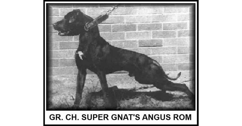 Central Coast Kennel Selezione American Pitbull Terrier Adba